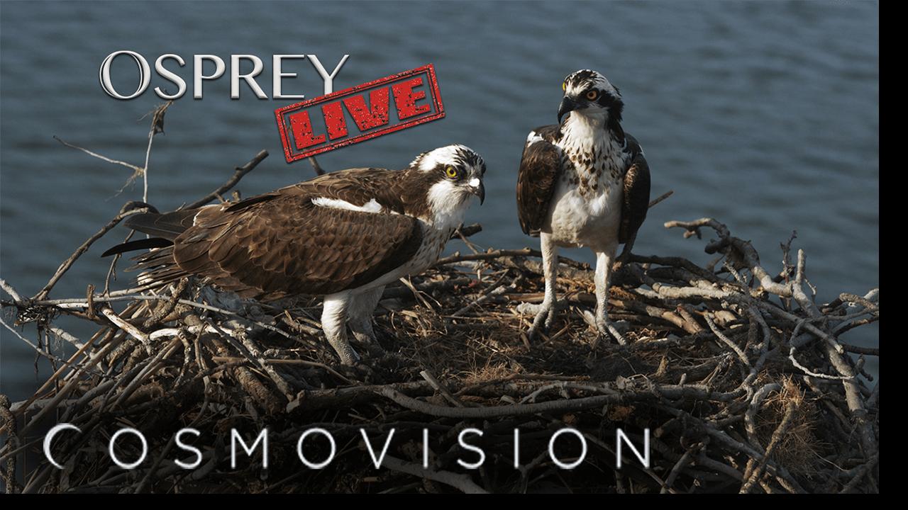 Osprey-LIVE_Youtube-Thumbnail_2